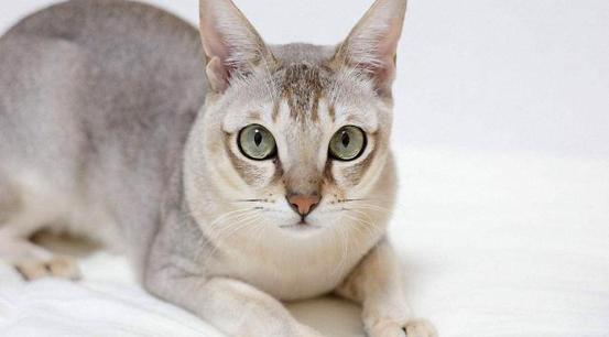 猫 性格 雌